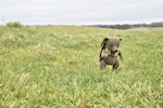 Muki Bear Strolling down the Cursus, Stonehenge